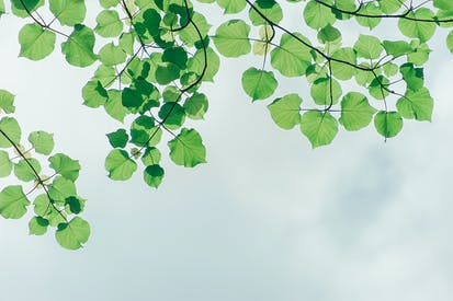 Photography Of Leaves Under The Sky