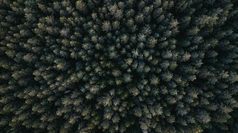 Aerial Photography Of Green Leafed Trees