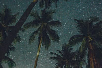 Low Angle Photography Of Coconut Trees Under A Starry Sky