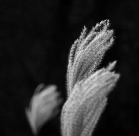 Grayscale Photo Of A Plant