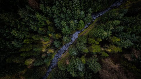Top View Photo Of Pine Trees