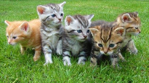 Assorted Color Kittens