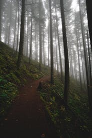 Narrow Pathway Through Coniferous Trees In Forest