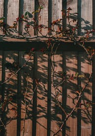 Brown Wooden Frame With Brown Tree Branches