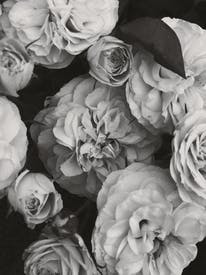 White Roses In Grayscale Photography