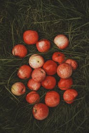 Red Apples On A Grass